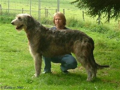 ... 犬 的 品种 名字 加 图片 大型 犬 品种 搜狗 百科