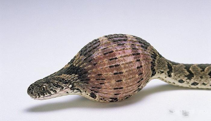 手工制作蛋壳金鱼步骤