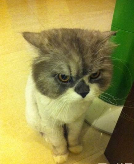猫生气了怎么办? 怎么劝它啊?