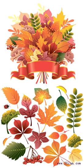 [动植物] 精美秋季红叶矢量图 eps 1p