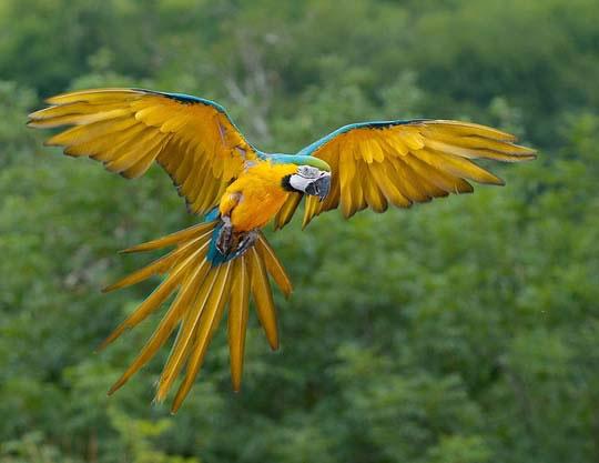 鳥的鮮與麗 - 兰绿相间  - 兰绿相间