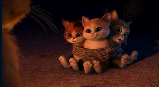 猫太可爱照片