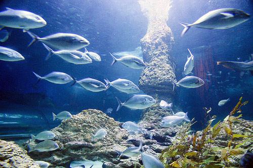 【海游天龙】炫彩海底世界