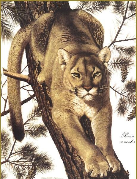 brenders的写实动物绘画赏析(上)